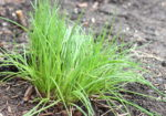 Gardening Tips- What type of plants grow best in Zone 5